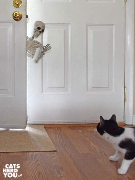 black and white tuxedo cat looks surprised by skeleton leaning in open door