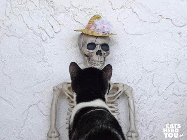 black and white tuxedo kitten looks at skeleton wearing straw hat