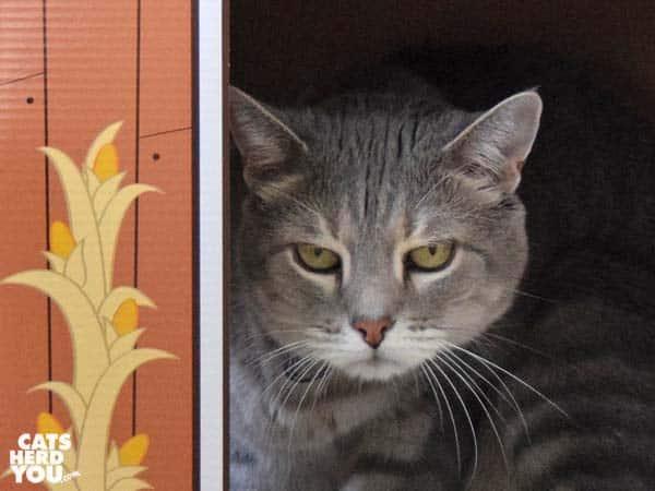 gray tabby cat in barn