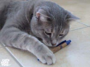 gray tabby cat and pen