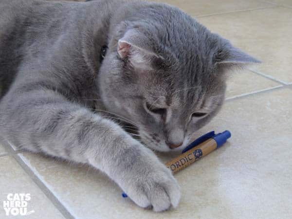 gray tabby cat and pen