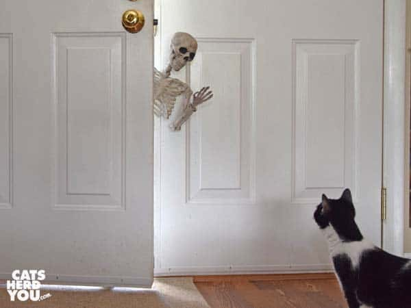 black and white tuxedo cat looks at skeleton leaning in open door