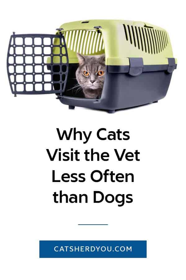 Why Cats Visit the Vet Less Often than Dogs -- What is it with people who will take their dog to the vet but won't take their cat? #cat #health