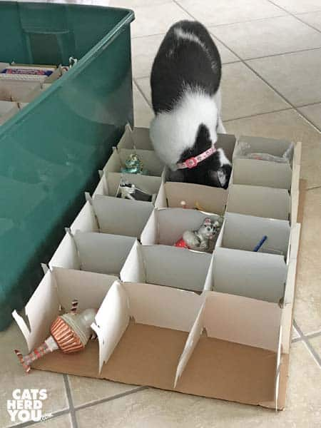 black and white tuxedo kitten puts head in christmas ornament box