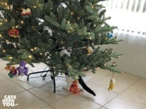 black and white tuxedo kitten climbs artificial tree