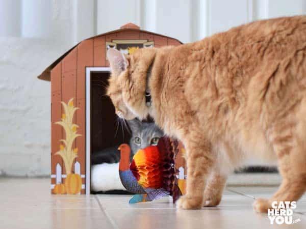 orange tabby cat looks at turkey honeycomb decoration
