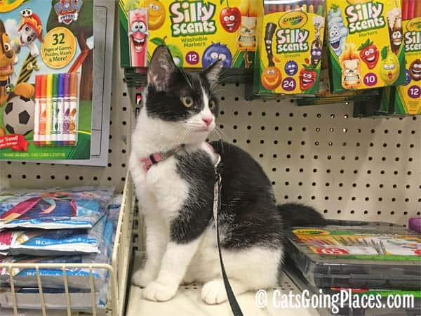 black and white tuxedo kitten sits on shelf among art supplies