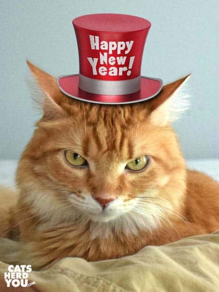 orange tabby cat wearing happy new year hat