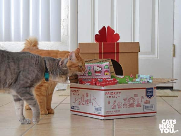 orange tabby cat and gray tabby cat look at priority mail box full of wrapped gifts