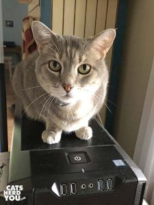 gray tabby cat sits on top of computer tower