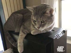 gray tabby cat leans on power button of computer tower