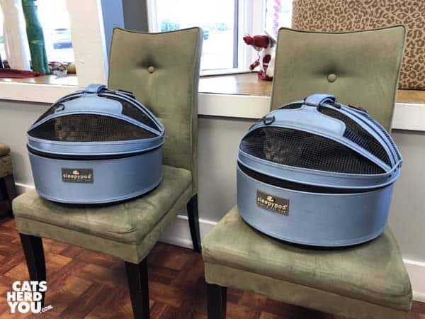 two sleepypod carriers wait in the lobby of veterinarian's office