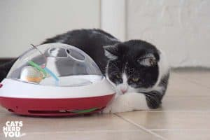 black and white tuxedo kitten plays with ufo toy