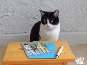 black and white tuxedo kitten looks at card and pen