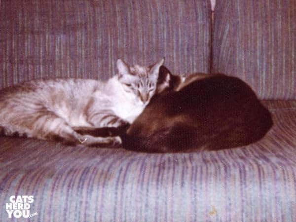 cats sleep together on sofa
