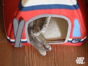 gray tabby cat with back paws hanging out of covered bed