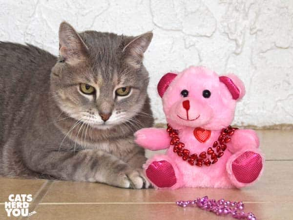 gray tabby cat next to plush, pink bear