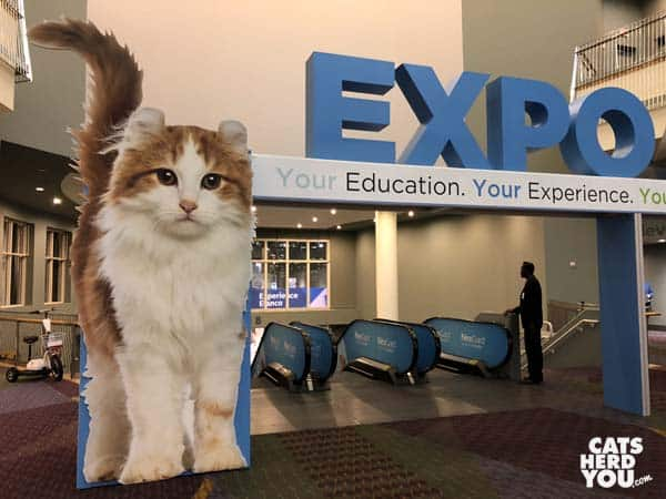 larger than life cat outside VMX expo entrance