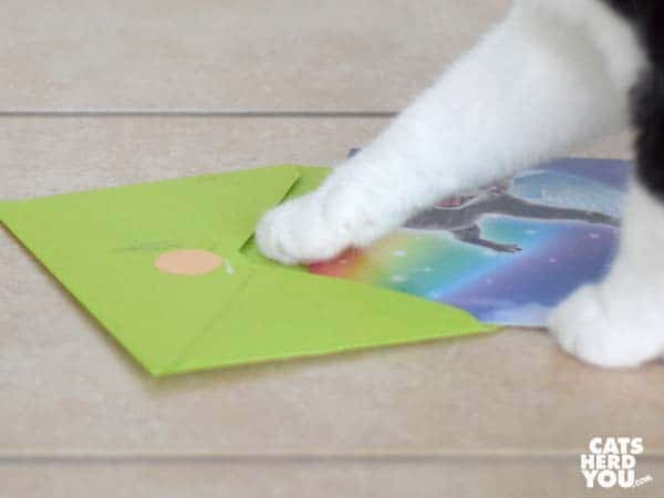 white paw slides card out of envelope