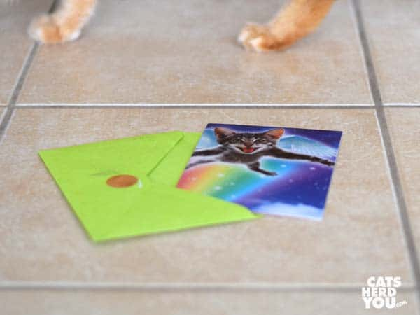 cat greeting card with orange tabby cat's paws in background