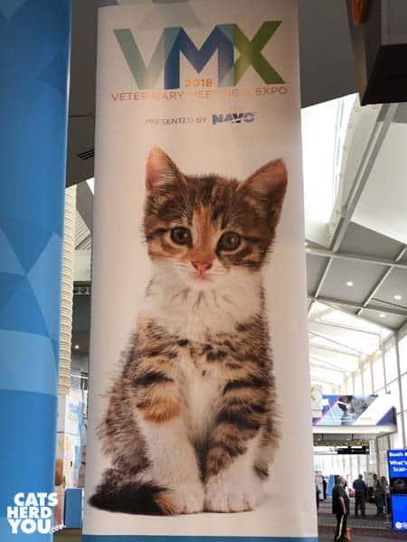 cat banner at vmx