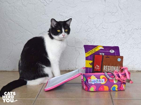 black and white tuxedo cat stands next to lunchbox full of cat items