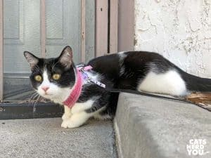 black and white tuxedo cat sits with rear legs on curbing