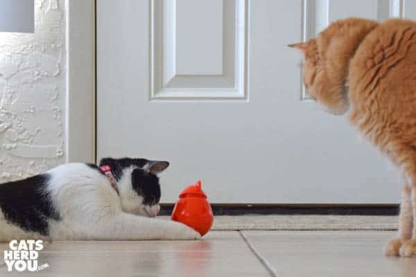 black and white tuxedo cat paws orange Doyenworld toy while orange tabby cat looks on