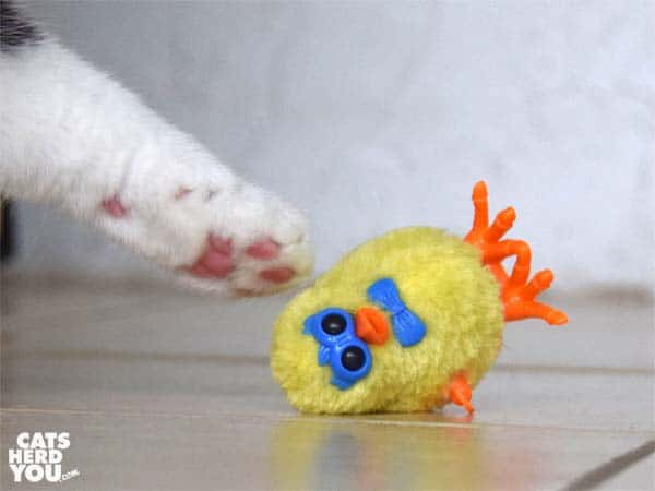 white paw touches topled wind-up chick