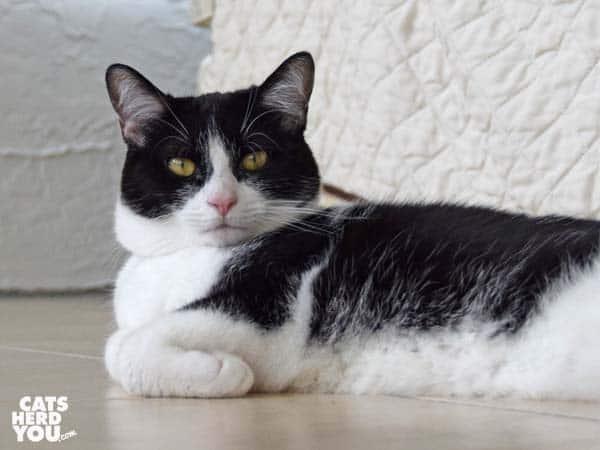 black and white tuxedo cat lounges on tile floor