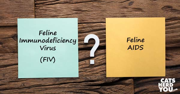 FIV or Feline AIDS?
