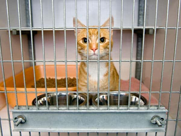 Cat in a cage in an animal shelter. Image credit: depositphotos/Buurserstraat38