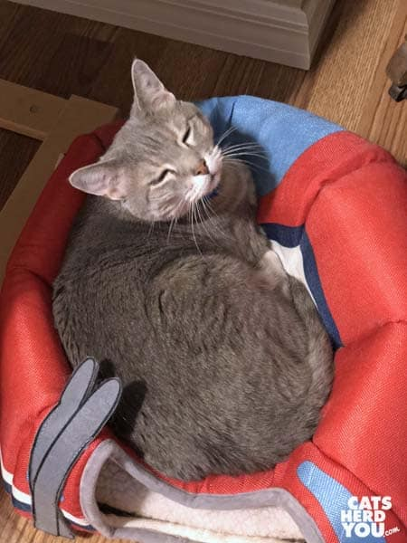 gray tabby cat sits on top of tent bed