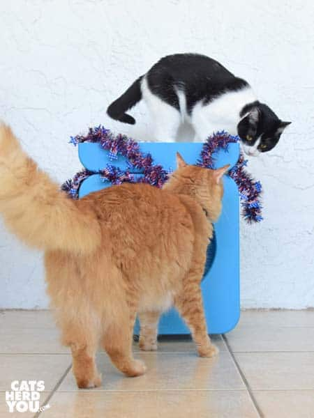 black and white cat and orange tabby cat look at patriotic garland