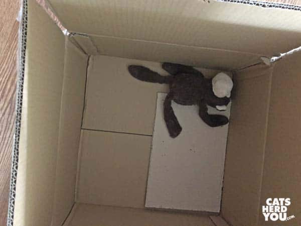 stuffed monkey in cardboard box