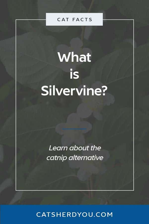 What is Silvervine? #catfacts #catnipalternative