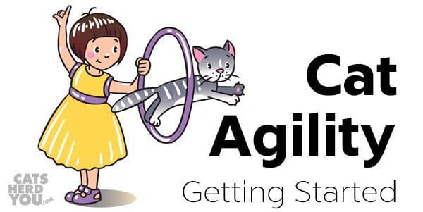Cat Agility - Getting Started