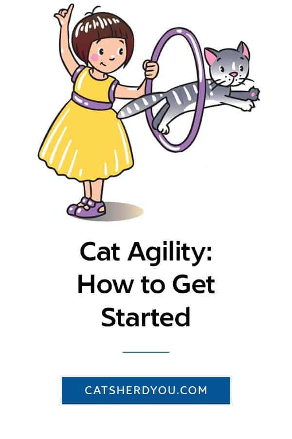 Cat Agility: How To Get Started #Cat #ability #ICAT