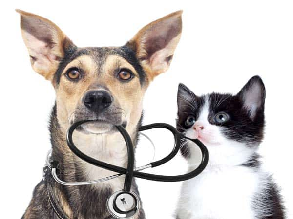 dog and cat with stethoscope