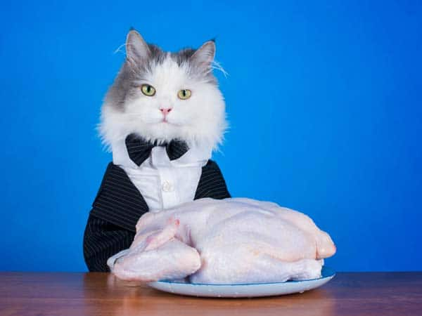 Cat in tuxedo sits with whole, raw chicken. Photo credit: depositphotos/kuban_girl