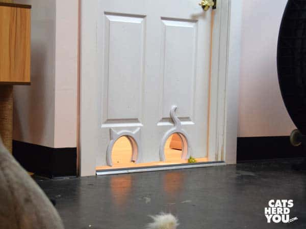 doorways to litterboxes at Tally Cat Cafe