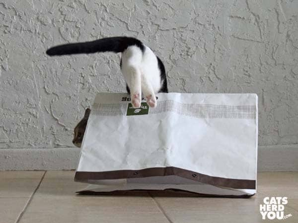black and white tuxedo cat leaps over bag