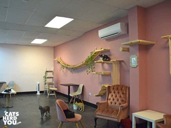 cat room at Tally Cat Cafe