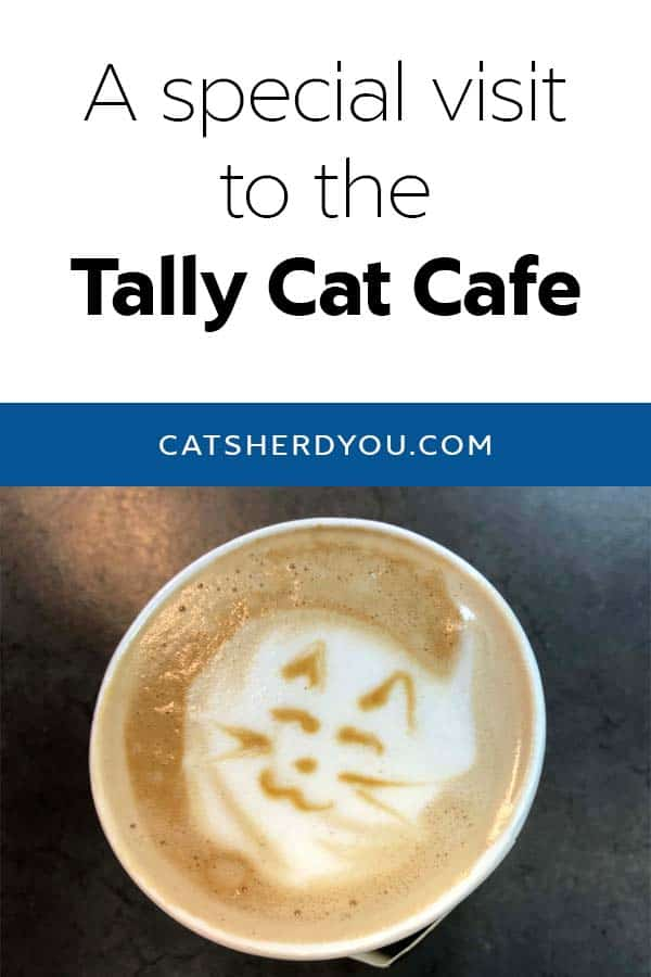 A very special visit to the Tally Cat Cafe in Tallahasee Fl, where you can drink coffee and coffee and visit with adoptable cats. #adoptdontshop #adoption #cats #catcafe