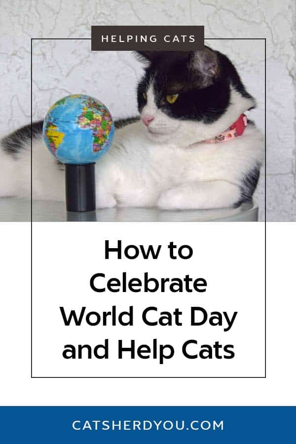 How to celebrate World Cat Day... and help cats while you're doing it! #WorldCatDay #Cats