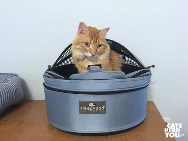 orange tabby cats sit in Sleepyod mobile pet bed