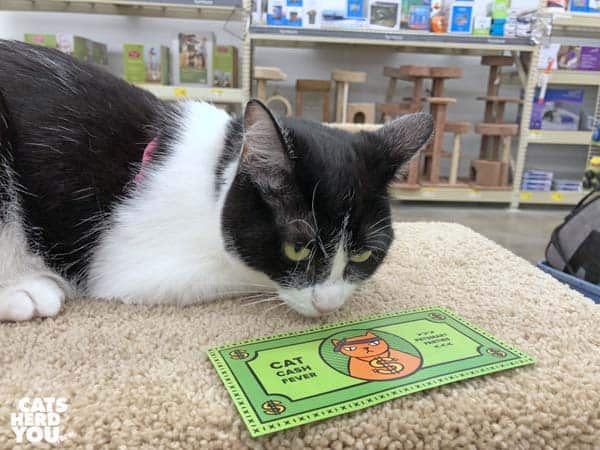 "black and white tuxedo cat looks at ""cat cash"""