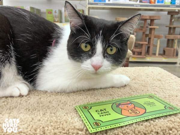 """black and white tuxedo cat has """"cat cash"""""""