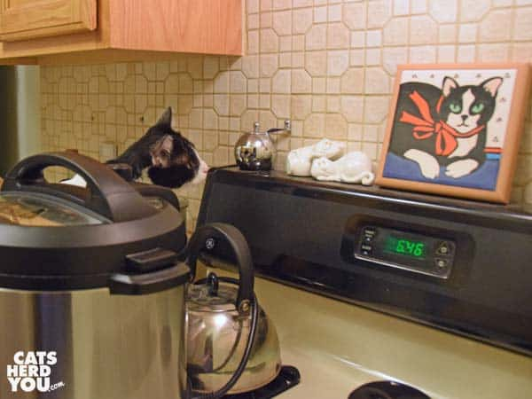 black and white tuxedo cat looks at tuxedo cat plaque on stove