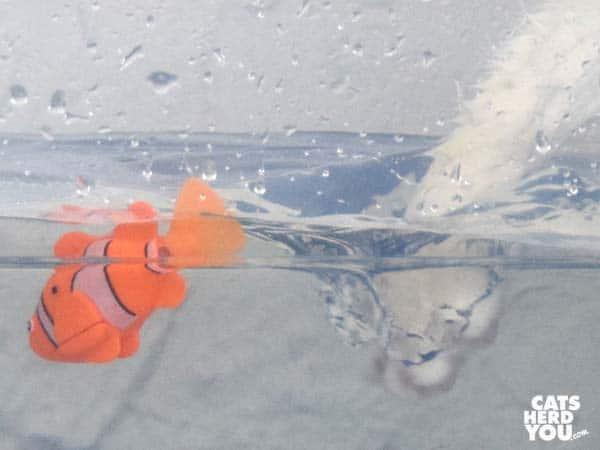 white paw splashes next to robotic fish